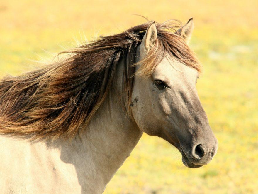 Übertragung einer Pferdepension unter Nießbrauchsvorbehalt